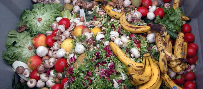 Aproveitamento de desperdícios de fruta para produção de bioetanol