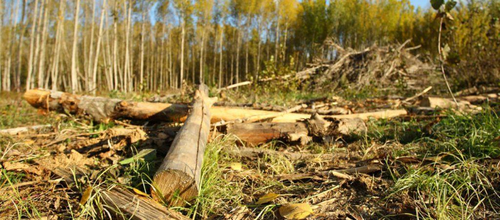 valorização de subprodutos agroflorestais, de resíduo a recurso energético sustentável e de elevado potencial