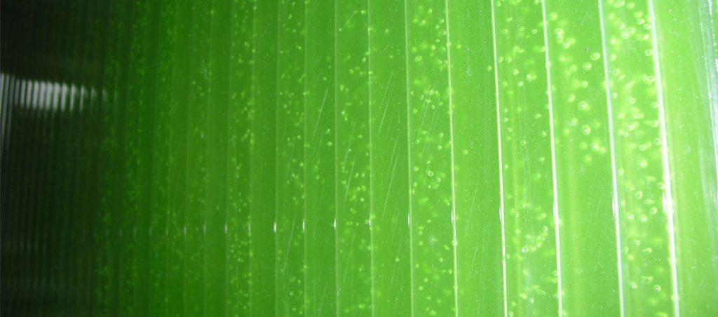 o papel das microalgas na transição energética